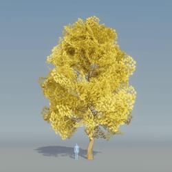 Maple Tree Yellow 2
