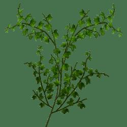 Climbing Ivy Small