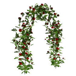 Climbing Rose - Arch - Red