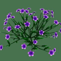 Princess Flower Plant - Med