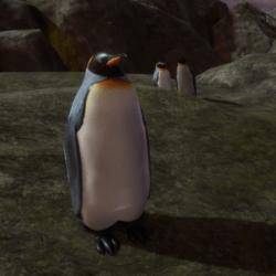 Animals - Pinguin