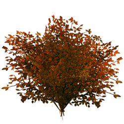 Bush - Copper