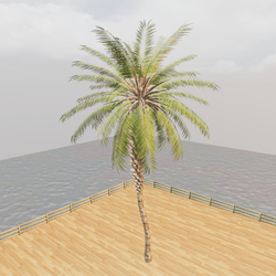 Palm Tree - Beach Tropical