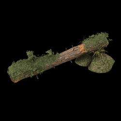 Tree Log Prop