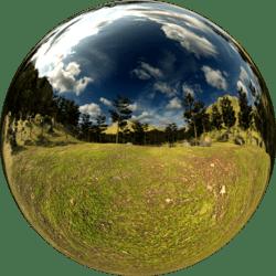 Pine Forest Ground Skybox