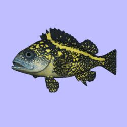 Rockfish China Animated