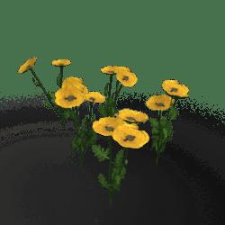 Plant-Poppy Group Yellow