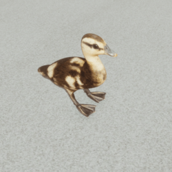Animals - Baby Duck