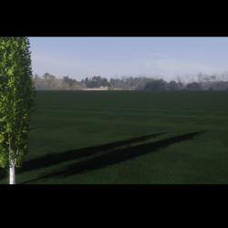 Grass Dark Ground