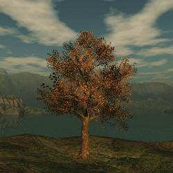 Fall Oak 2