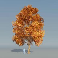 Maple Tree Autumn B 5