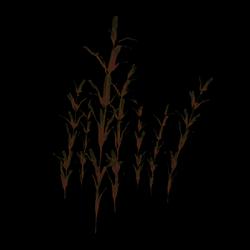 Aquatic Plant [2]