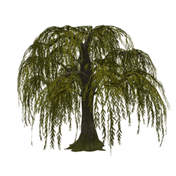 Weeping Willow - Dull Green