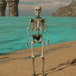Male Skeleton Avatar