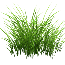 Grass Patch Small