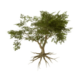 Wiggly Rooty Tree