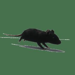 Rat dark [Animated]