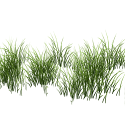 Grass Patch Medium v2