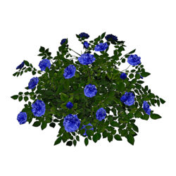 Rose Bush 5_Blue