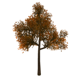 Tree 8 - Copper