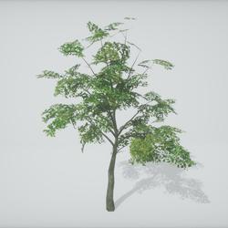 TKA-Tree 1A