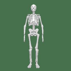 Skelly the Skeleton