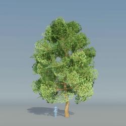 Maple Tree Green 3