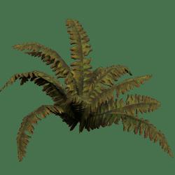 Plant Dry Fern