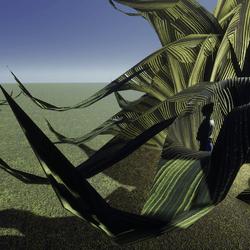 Fancey Striped Curley Aloe