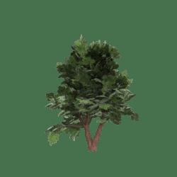 Twin Green Tree