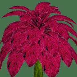 Coleus Plant 11