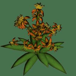 Star Flowers 4