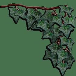 Dark Green Hanging Ivy Right