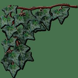 Dark Green Hanging Ivy Left