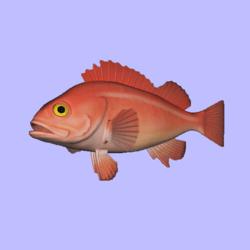 Rockfish YellowEye Animated