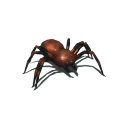 Striated creepy spider [Animated]