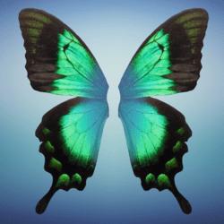 Wings 2 - Female - Green Blue
