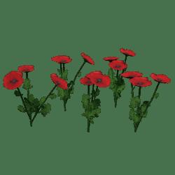 Plant-Poppy Group