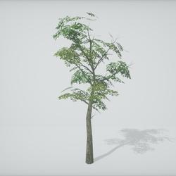 TKA-Tree 1B
