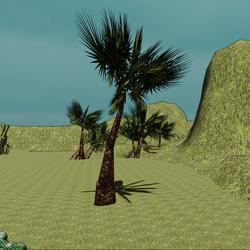 The Fan Palm Tree