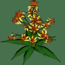 Star Flowers 7