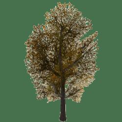 Tree 2 - Fall