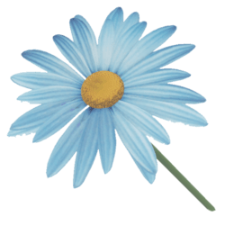 FLOWER BLUE DAISY