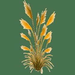 Pampas Grass_Gold