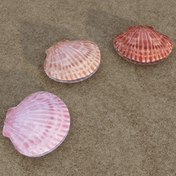 Clam Shell - Full - 3 Colors