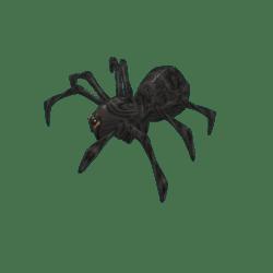 Big Black Spider