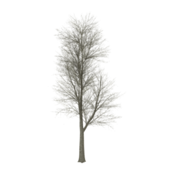 Frozen Tree [01]