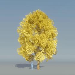 Maple Tree Yellow 1