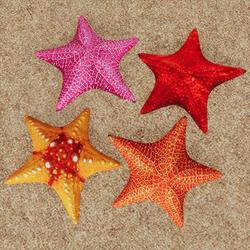 Starfish - 4 Colors