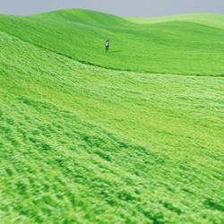 OPEN FIELDS GRASS HILLS - REALISTIC BLENDED NATURAL TEXTURE